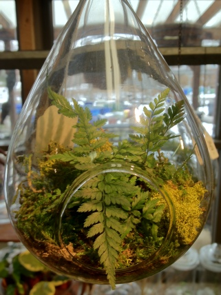 hanging tear drop terrarium.