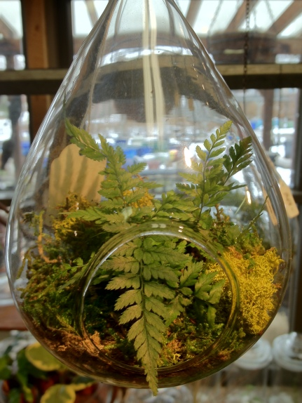 hanging tear drop terrarium.