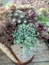 rustic olive basket planted.